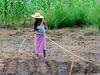 projet/irrigationjpg